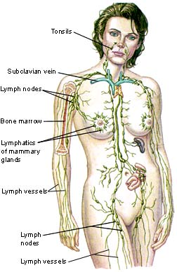 Why you need to Detox your Lymphatic System!!